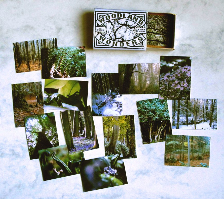 woodland-wonders-2