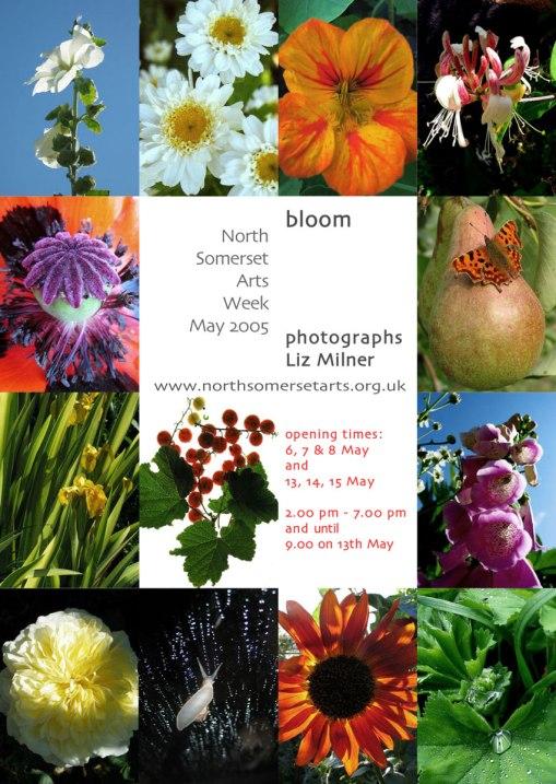bloom-flier