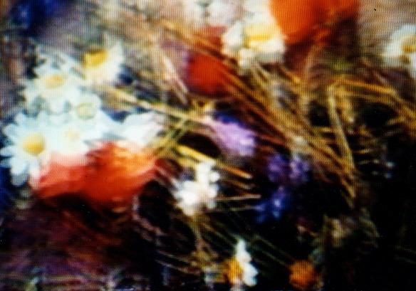 fallen_flowers_still