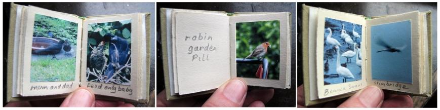 bird-book-3pics