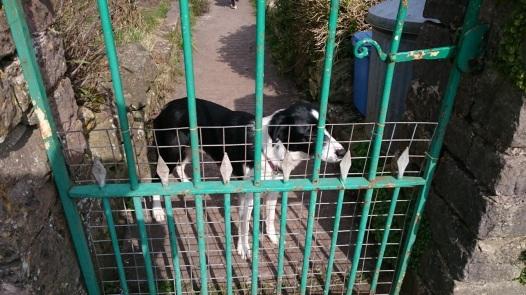 Sweet dog and green gate