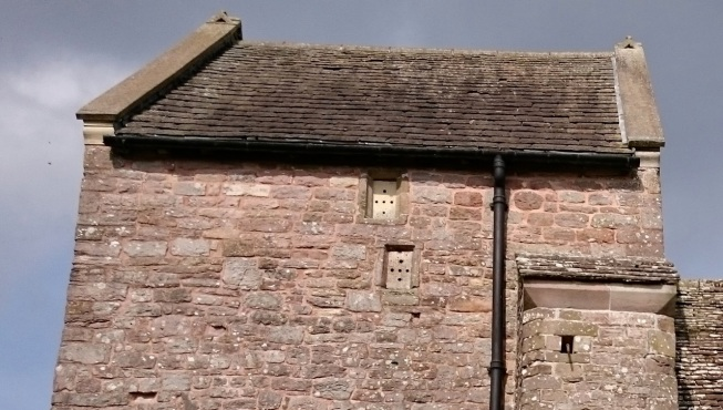 Small holes in small windows of church tower buzzing with small wasps.
