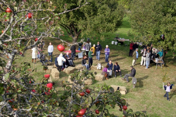 Tree-top view of Apple Day