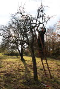 orchard-pruning